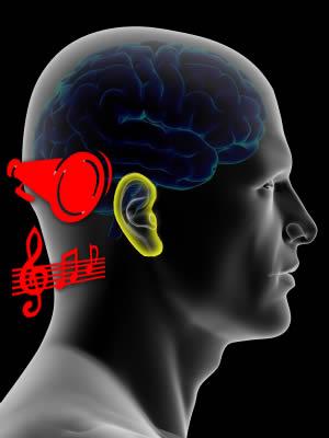 brain-ear