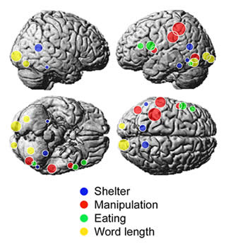 Brain areas activated by nouns
