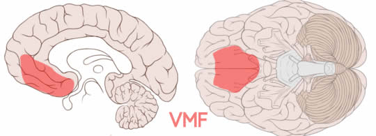 VMF - brain location for value decisions