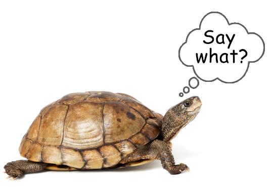 Deaf turtle?