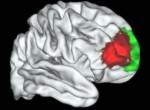 fmri frontal cortex