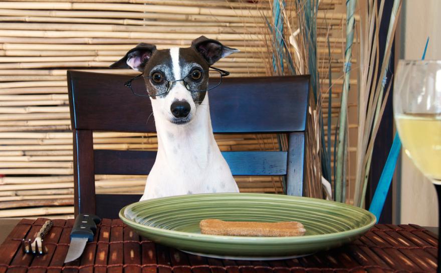 dog-dinner